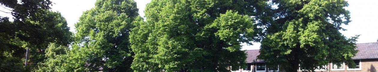 De Utrechtse Bomenstichting
