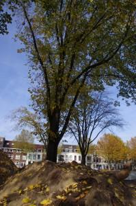boom paardenveld 3